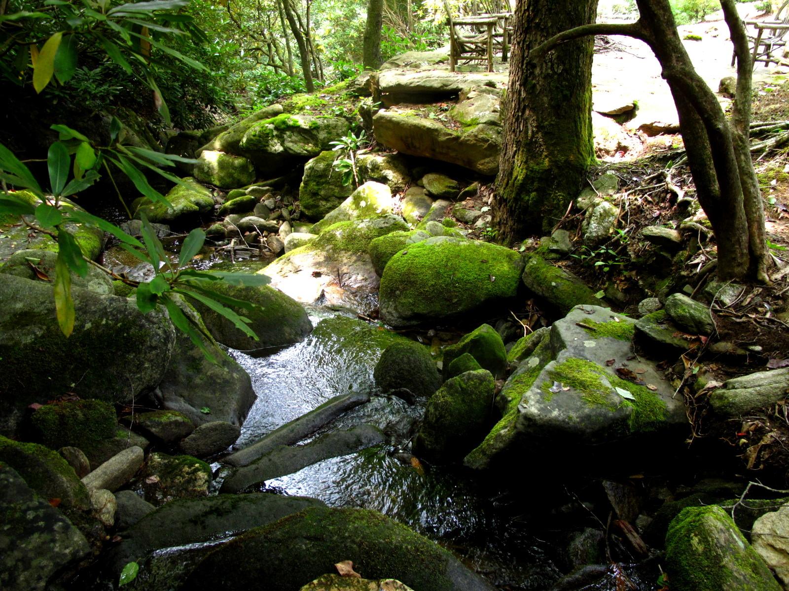 Greybeard Forest