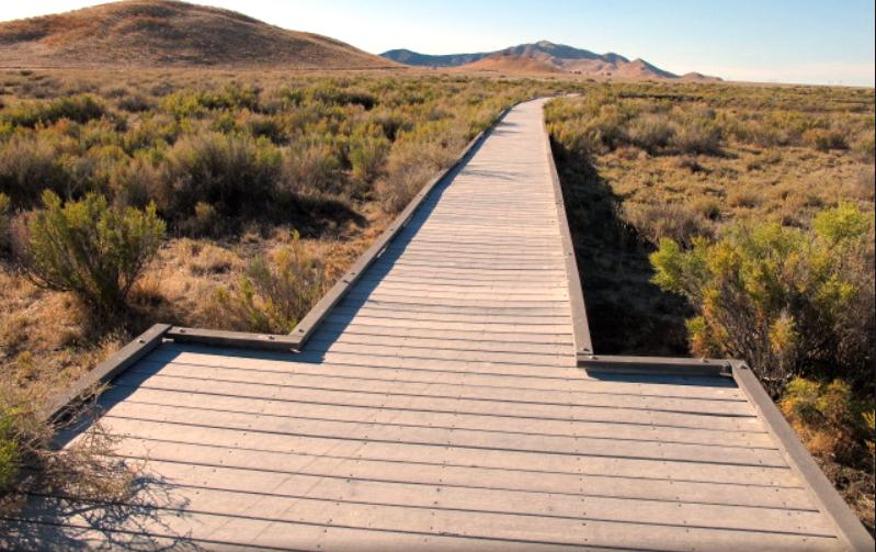 Walkway into Carrizo desert